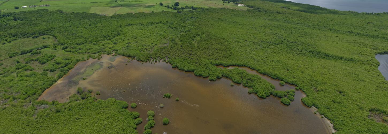 Mangrove de Génipa, PNRM/AUTREVUE