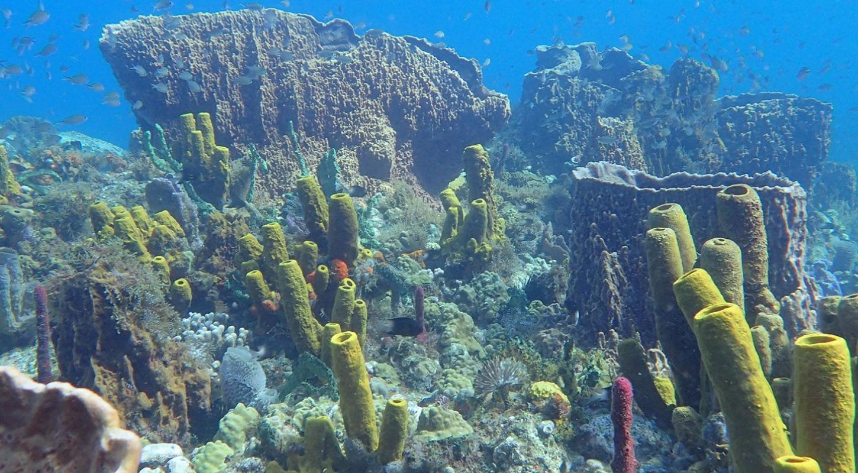 Martinique Plongée sous-marine Muséum National d'Histoire Naturelle